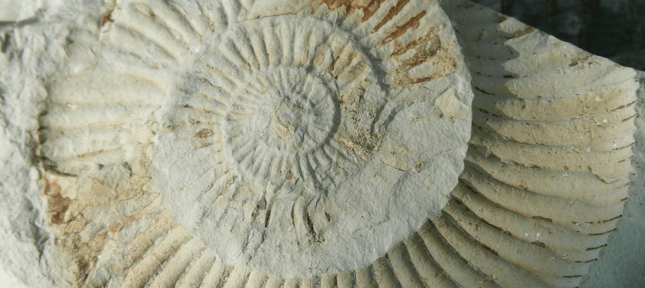 Ben Garrod loves finding fossils