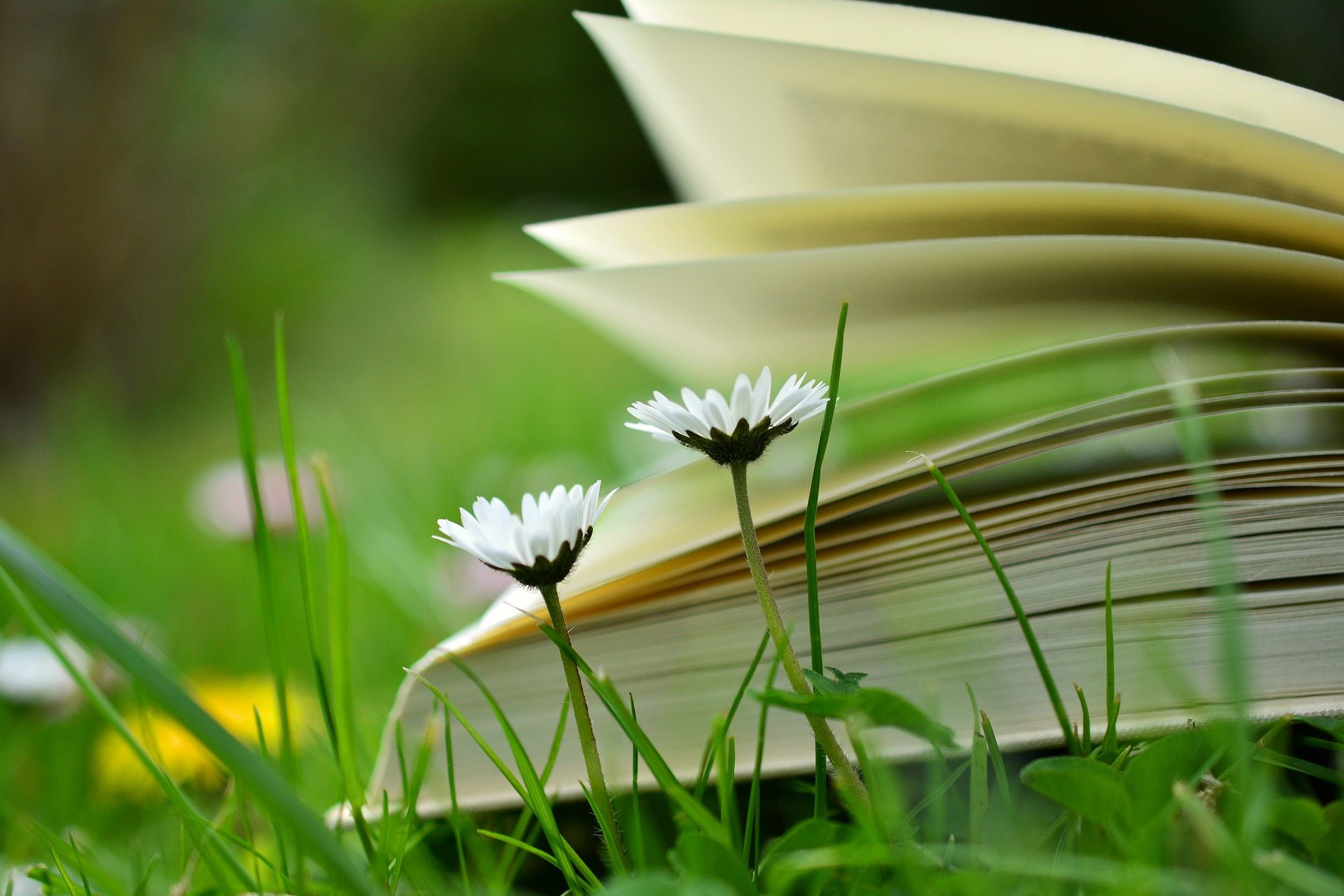 Summer reading for pleasure - book in the grass
