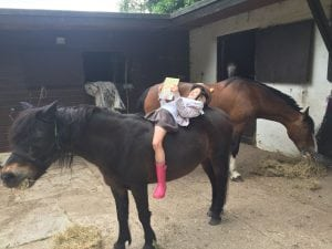 Competition winner photo: a child reading on the back of a horse